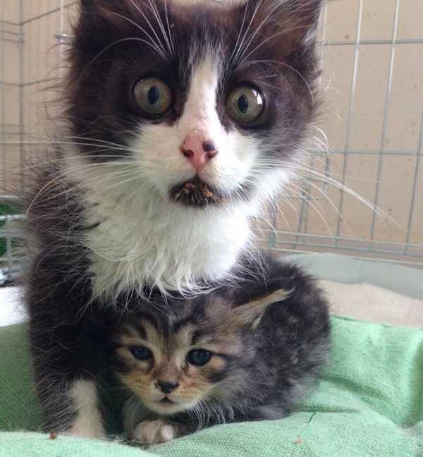 gravidanza dei gatti 5