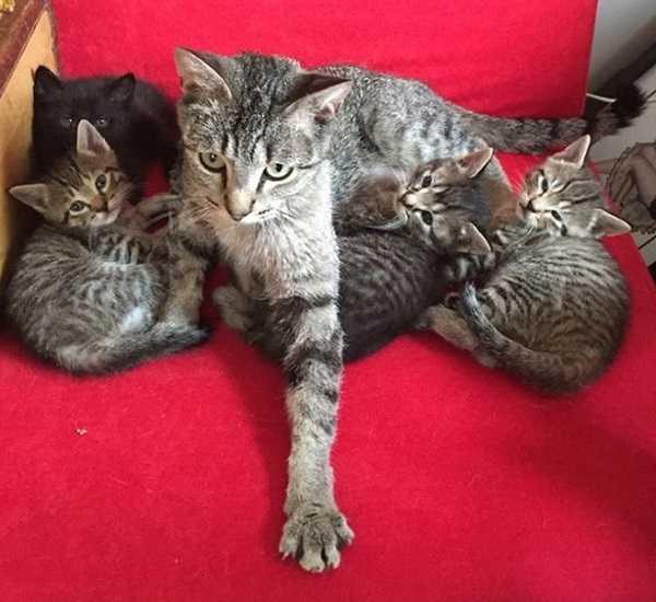 gravidanza dei gatti 4