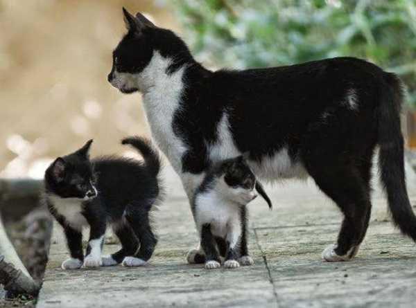 gravidanza nel gatto5