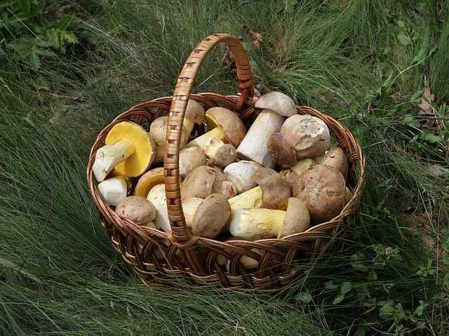pulire funghi porcini
