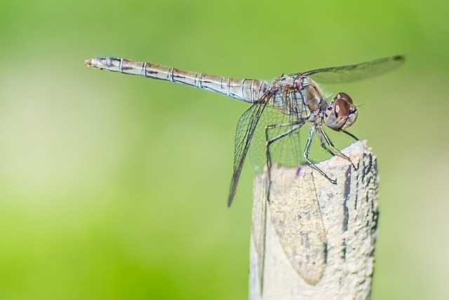 Lotta biologica alle zanzare