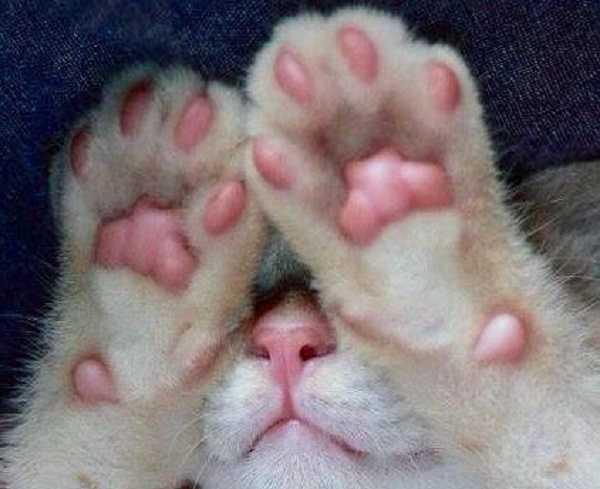 acne felina2