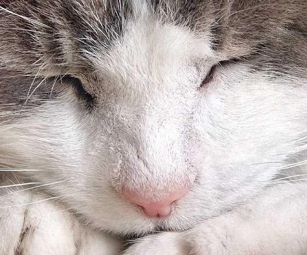 acne felina5