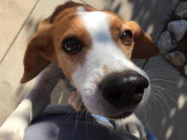 beagle nano4