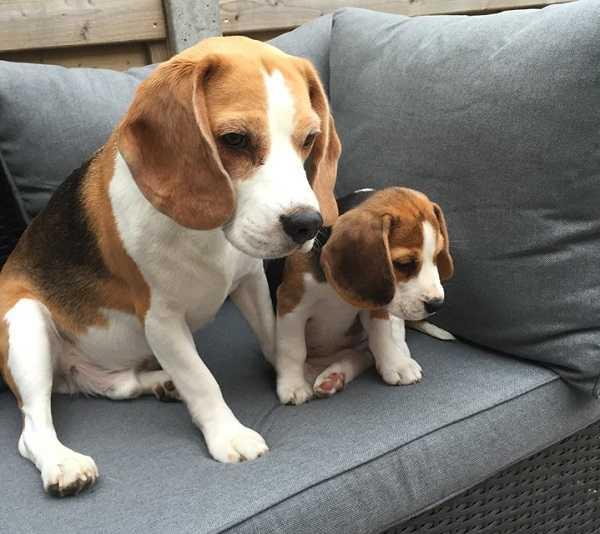 Cani da appartamento di taglia media - Idee Green