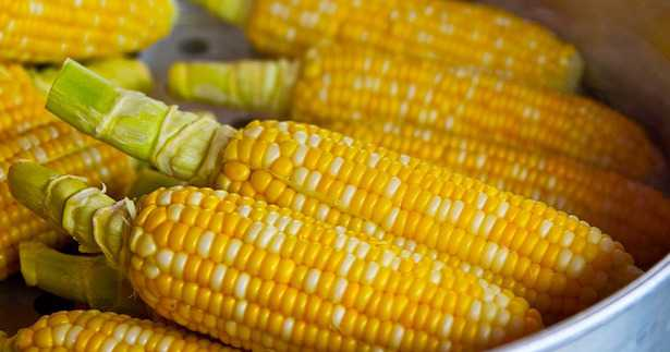 come coltivare mais da pop corn