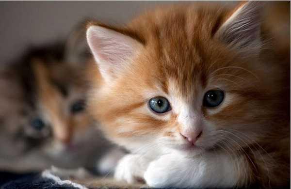 gatto soriano4