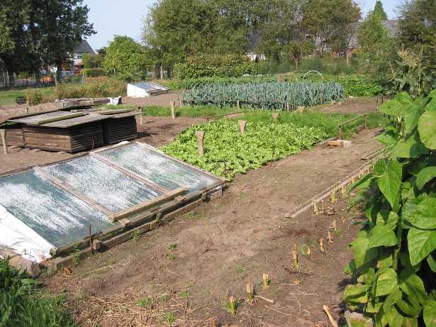 Impiantare un orto