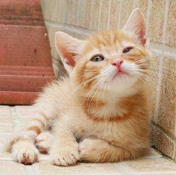 micosi gatto uomo
