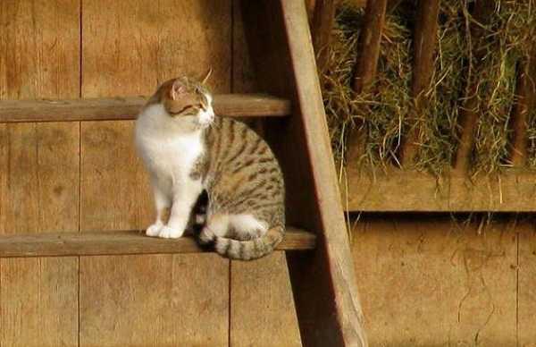 micosi gatto uomo3