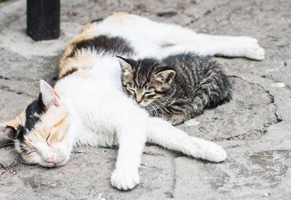 micosi gatto uomo4