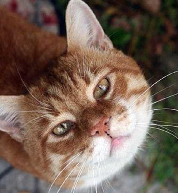 micosi gatto uomo5