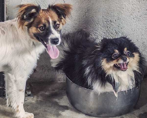 pensione cani2
