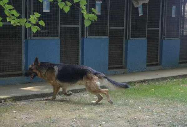 pensione cani3
