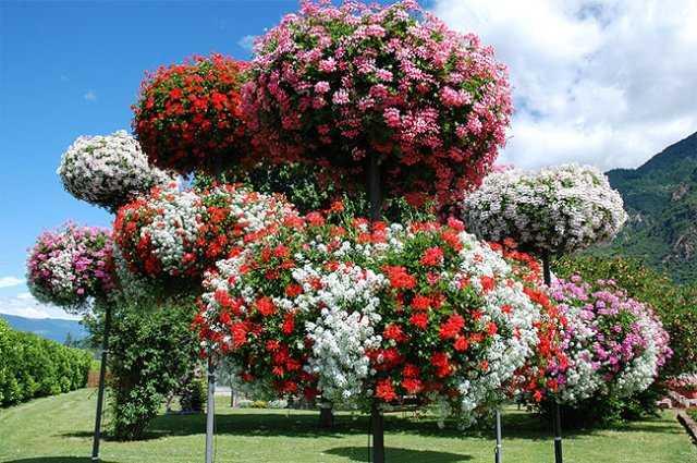 Piante che sopportano il caldo idee green for Piante ornamentali sempreverdi da esterno