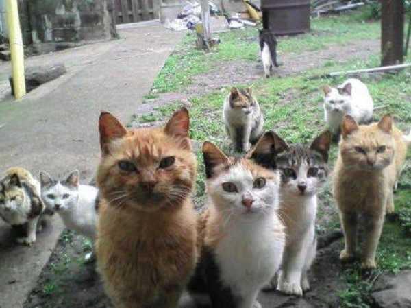 Quanto deve mangiare un gatto idee green for Cosa mangia il gatto