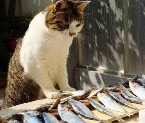 quanto mangia gatto6