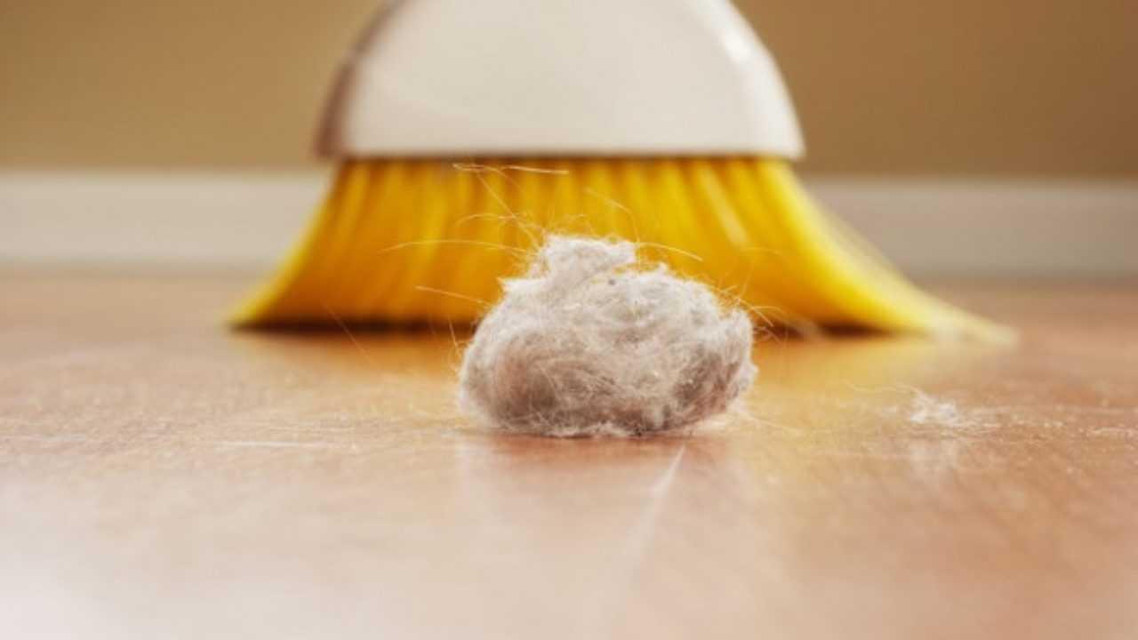 Come Uccidere Acari Della Polvere rimedi contro gli acari della polvere - idee green