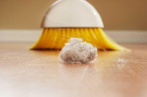 rimedi contro gli acari della polvere