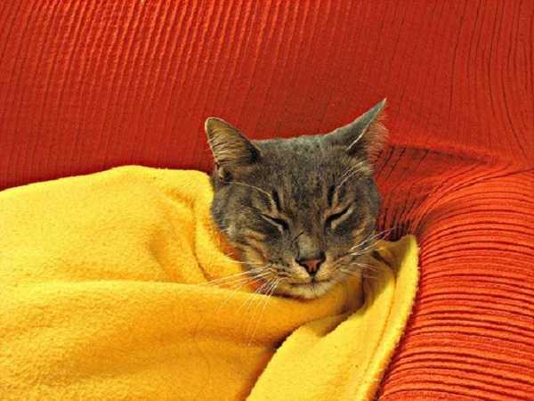 vaccinazioni gatti obbligatorie2