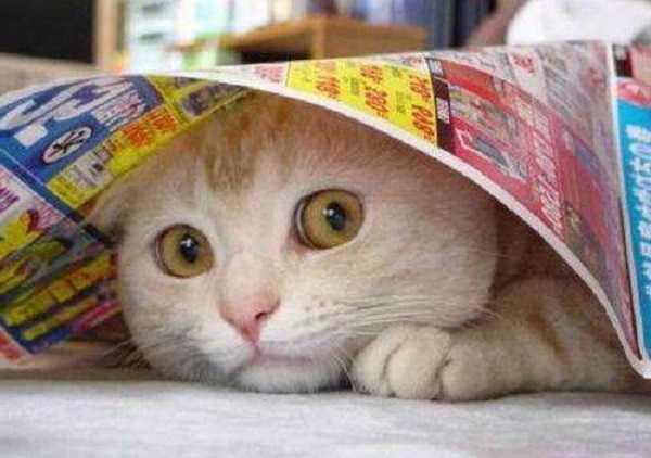 vaccinazioni gatti obbligatorie3