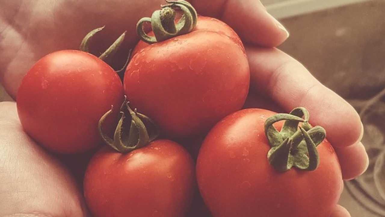Come Coltivare Pomodori Sul Balcone guida alla coltivazione dei pomodori in casa - idee green