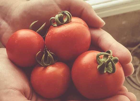 coltivazione pomodori in casa