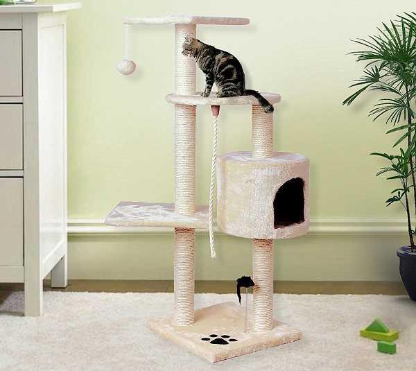 come addestrare gatto1