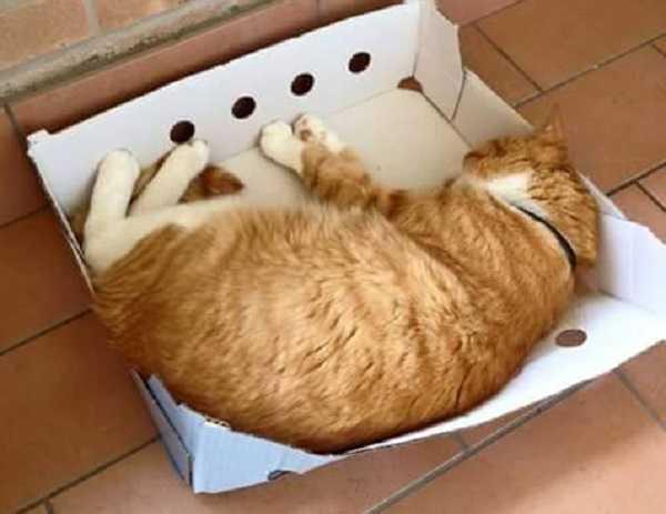 come addestrare gatto3