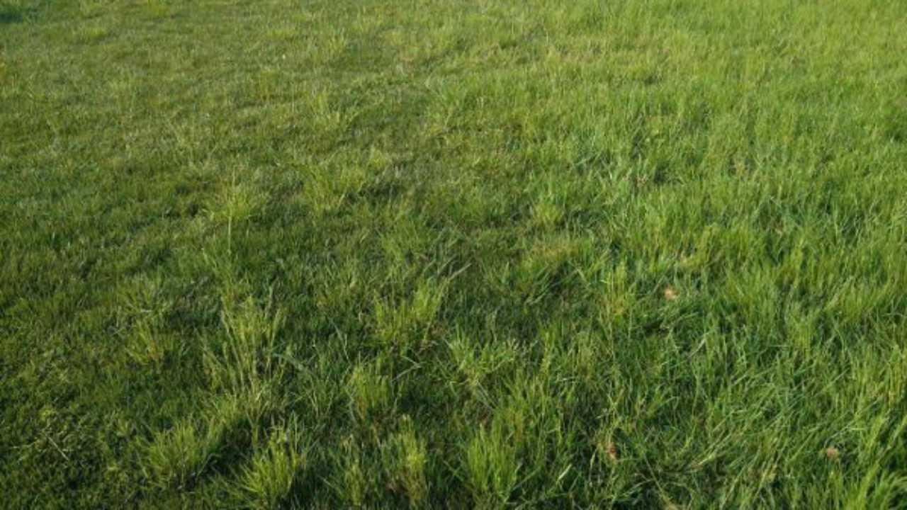 Concime Per Prato Autunnale concimare il prato in autunno - idee green