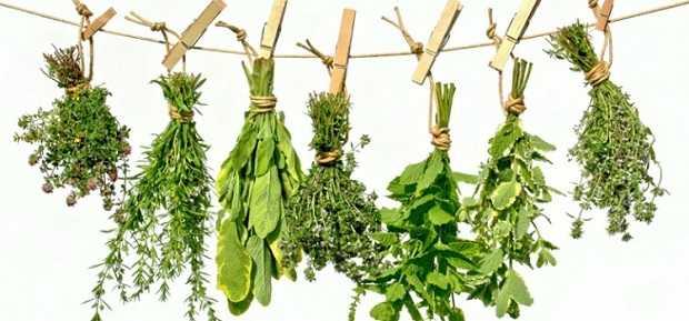 conservazione erbe aromatiche