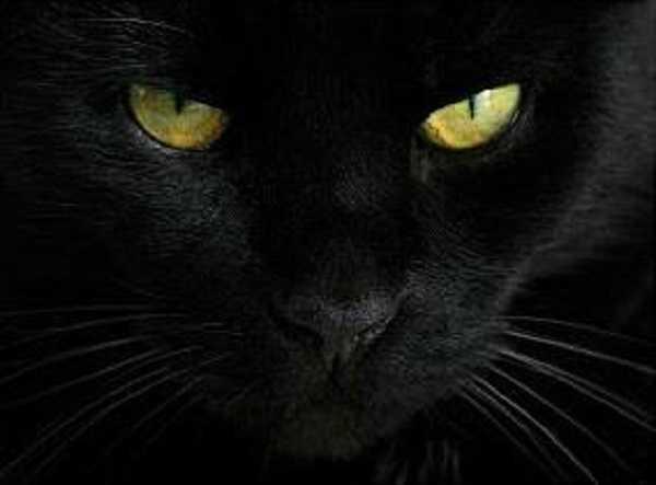 gatto nero1
