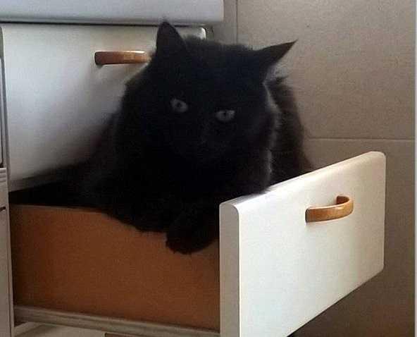 gatto nero2
