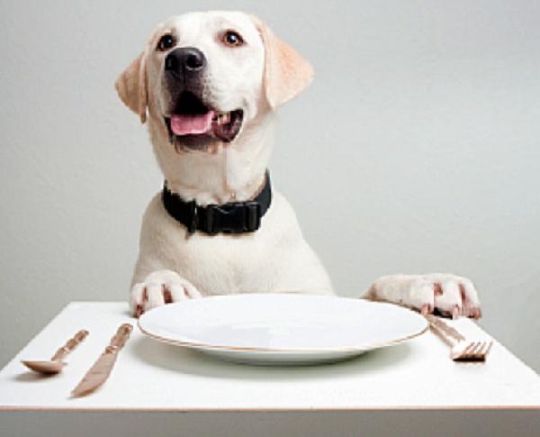 migliori crocchette cani3