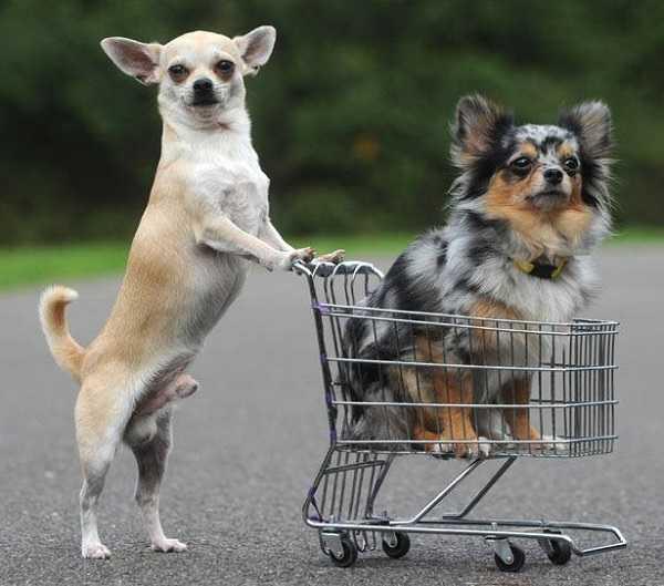 migliori crocchette cani4