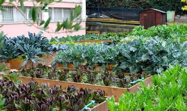 la coltivazione degli ortaggi invernali idee green