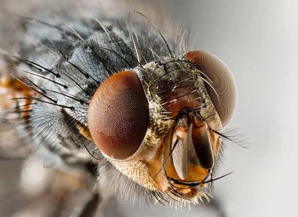 Scacciare le mosche