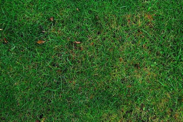 Come seminare un tappeto erboso