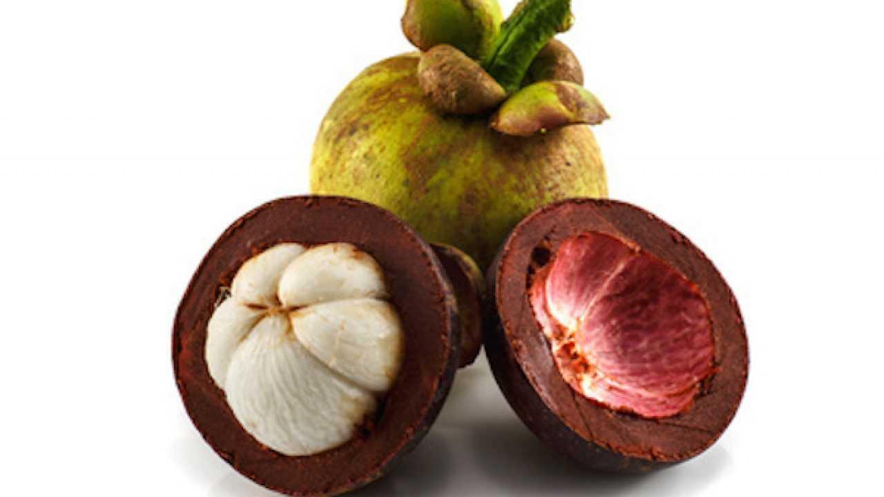 frutta asiatica asiatica garcinia cambogia