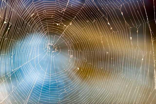allontanare i ragni
