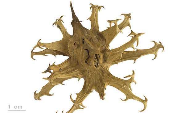 artiglio del drago pomata opinioni artrosi artrite