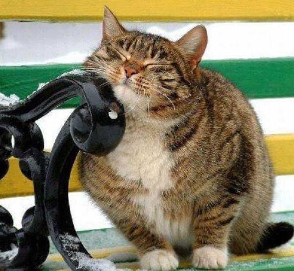 fusa gatto3