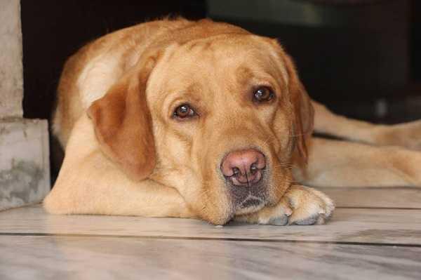 raffreddore del cane3