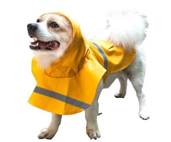 impermeabili cani1