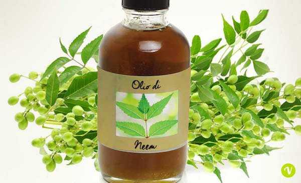 olio di neem in agricoltura