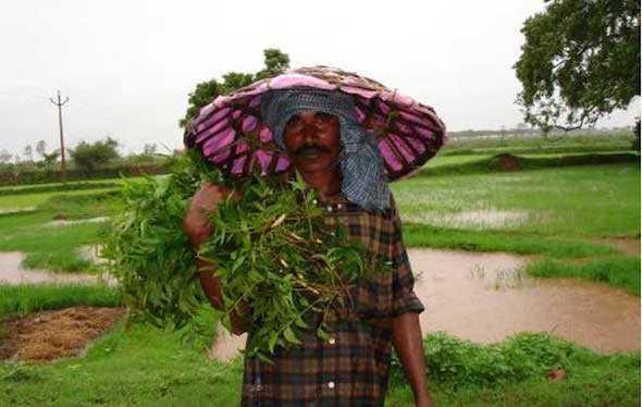 olio di neem in cosmesi