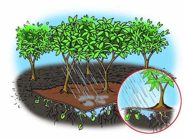piante resistenti al gelo