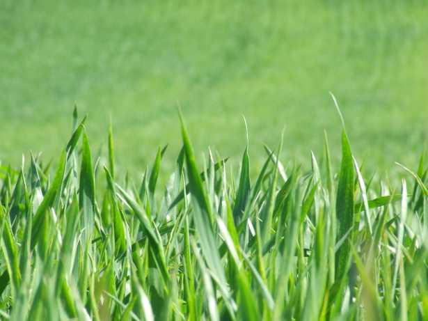 prato verde con la trasemina autunnale idee green