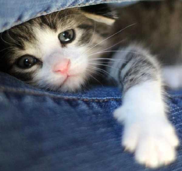 tosse gatti1