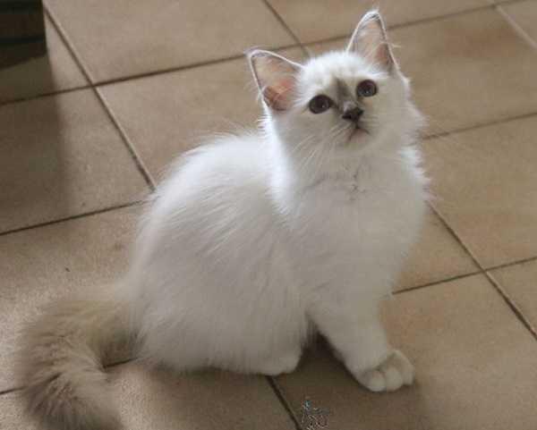 tosse gatti4